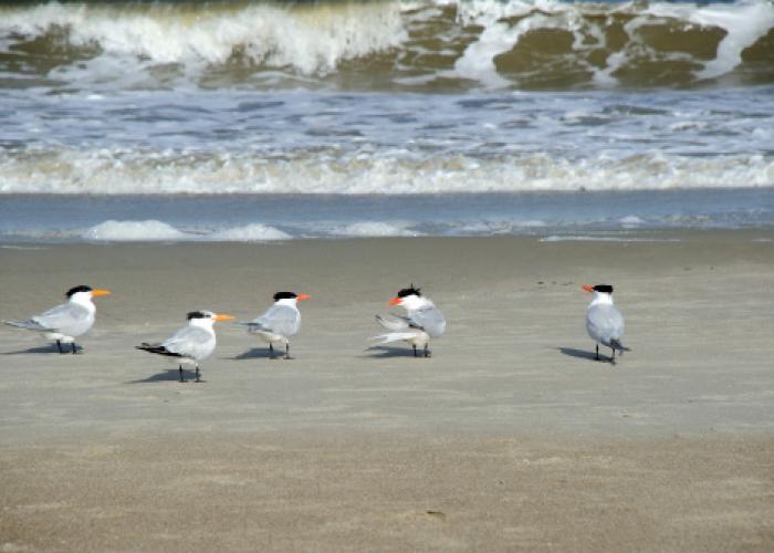 birds on beach in tybee island georgia