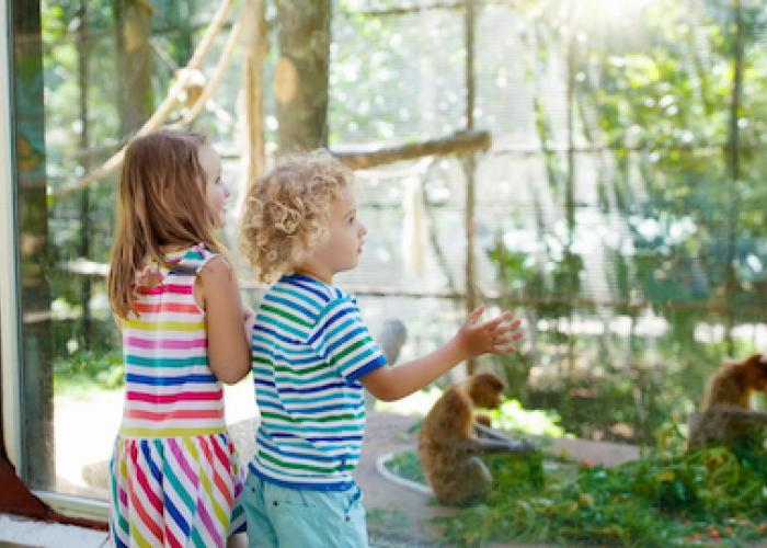 Children look out at a Zoo